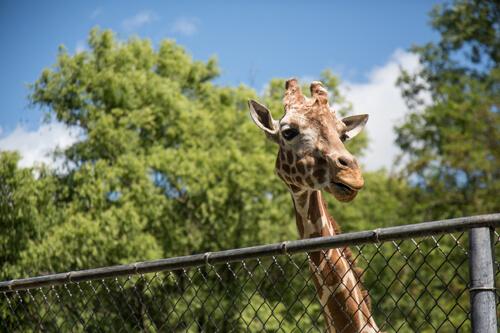cincinnati zoo and botanica garden ohio