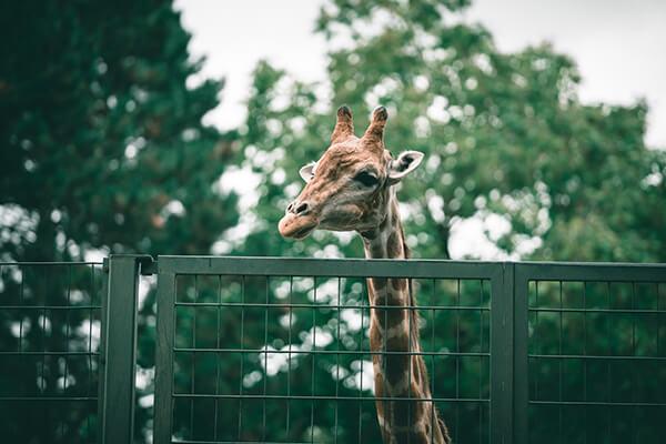 Omahas Henry Doorly Zoo and Aquarium
