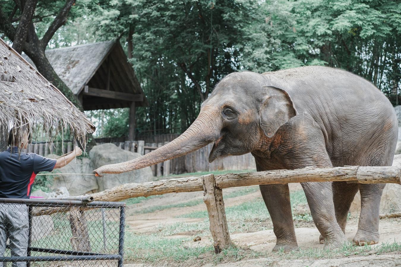 kansas city zoo Missouri