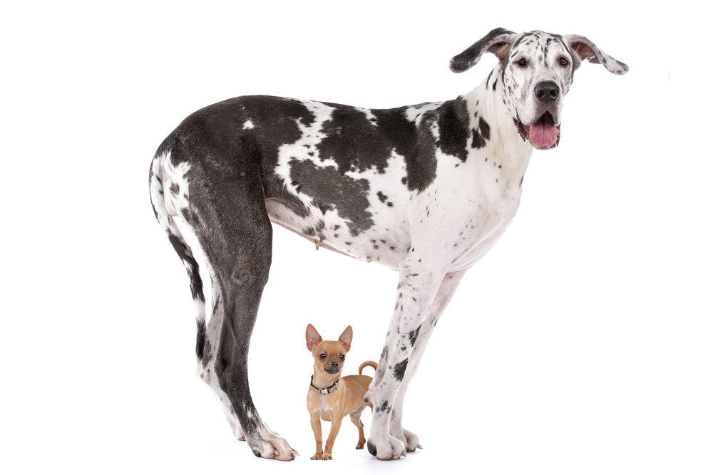 Although we welcome pets at our Weidner Apartment Homes, some breeds simply aren't built for apartment living.