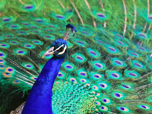 pueblo zoo colorado