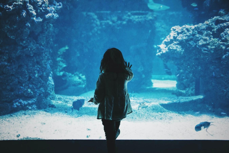 sea life kansas city aquarium missouri