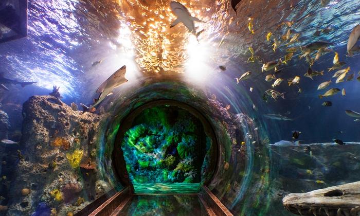 sea life michigan aquarium auburn hills