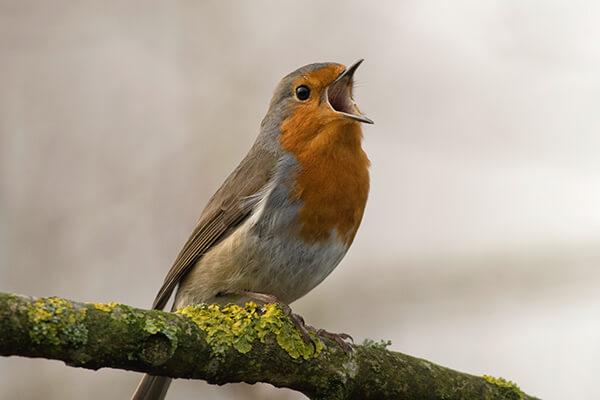 Lippincott Bird Sanctuary in Lima, Ohio