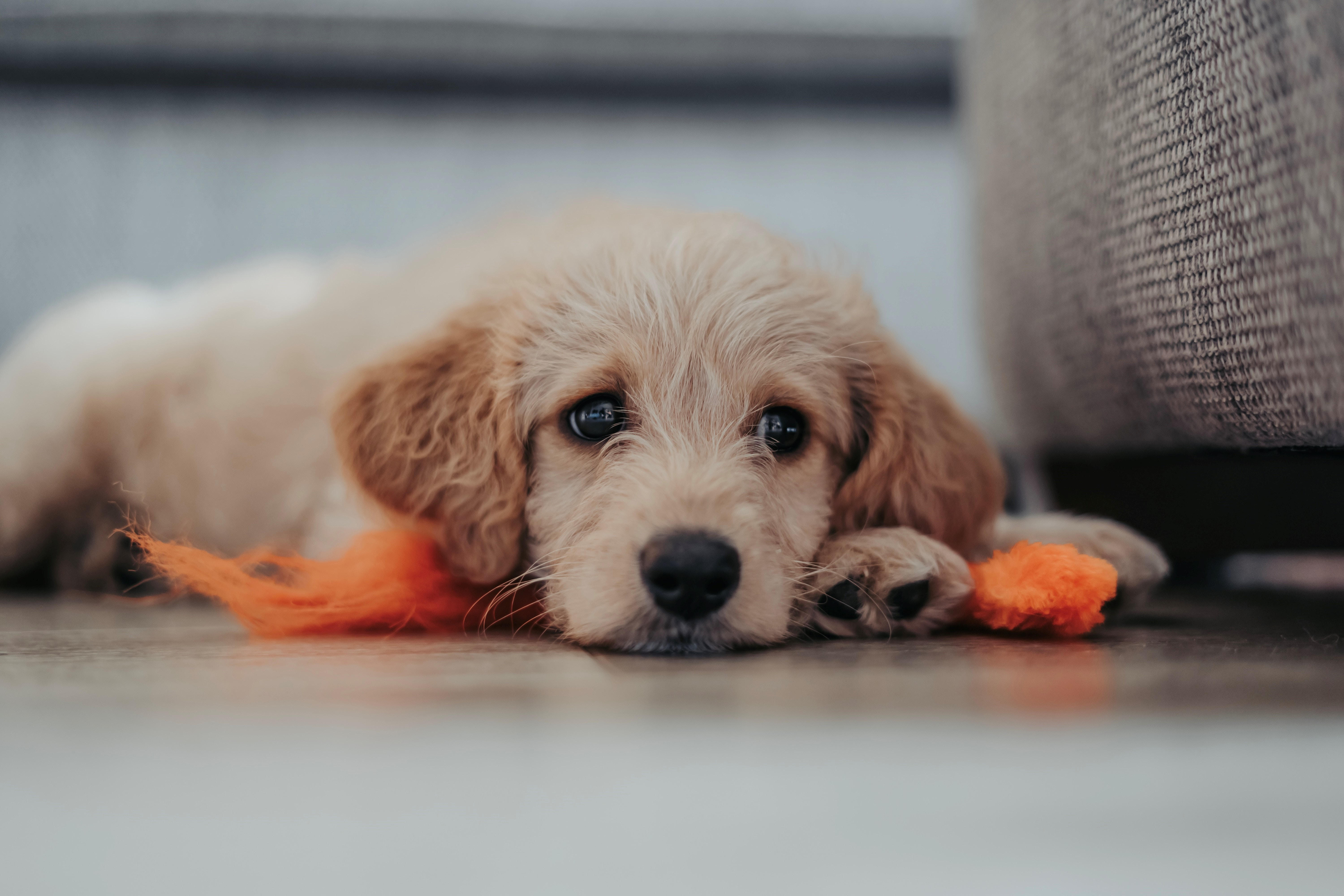 Puppy Proof Your Apartments For Rent Charlotte, NC