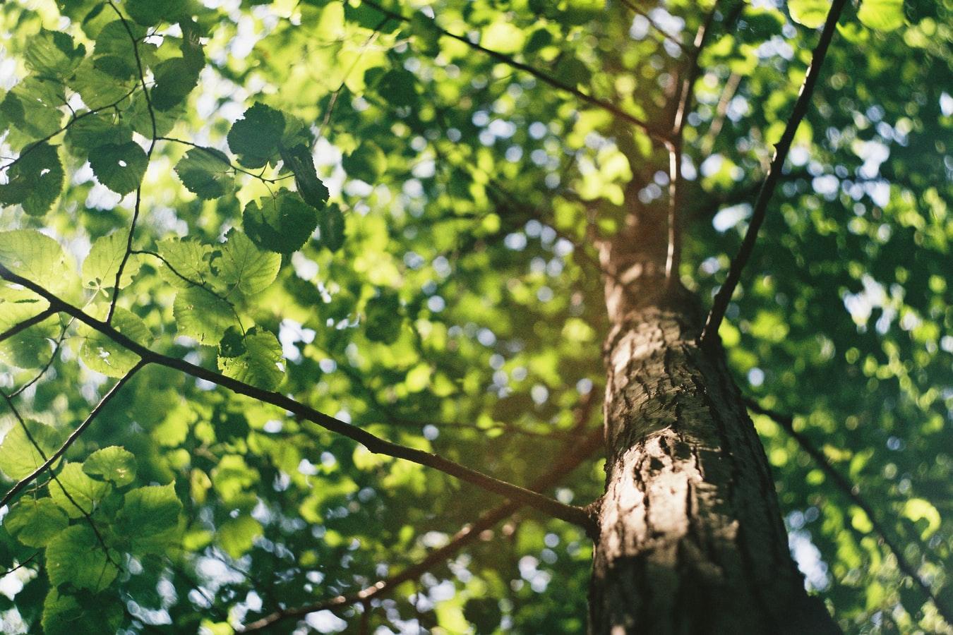 Greenbelt Forest Preserve North Chicago, IL