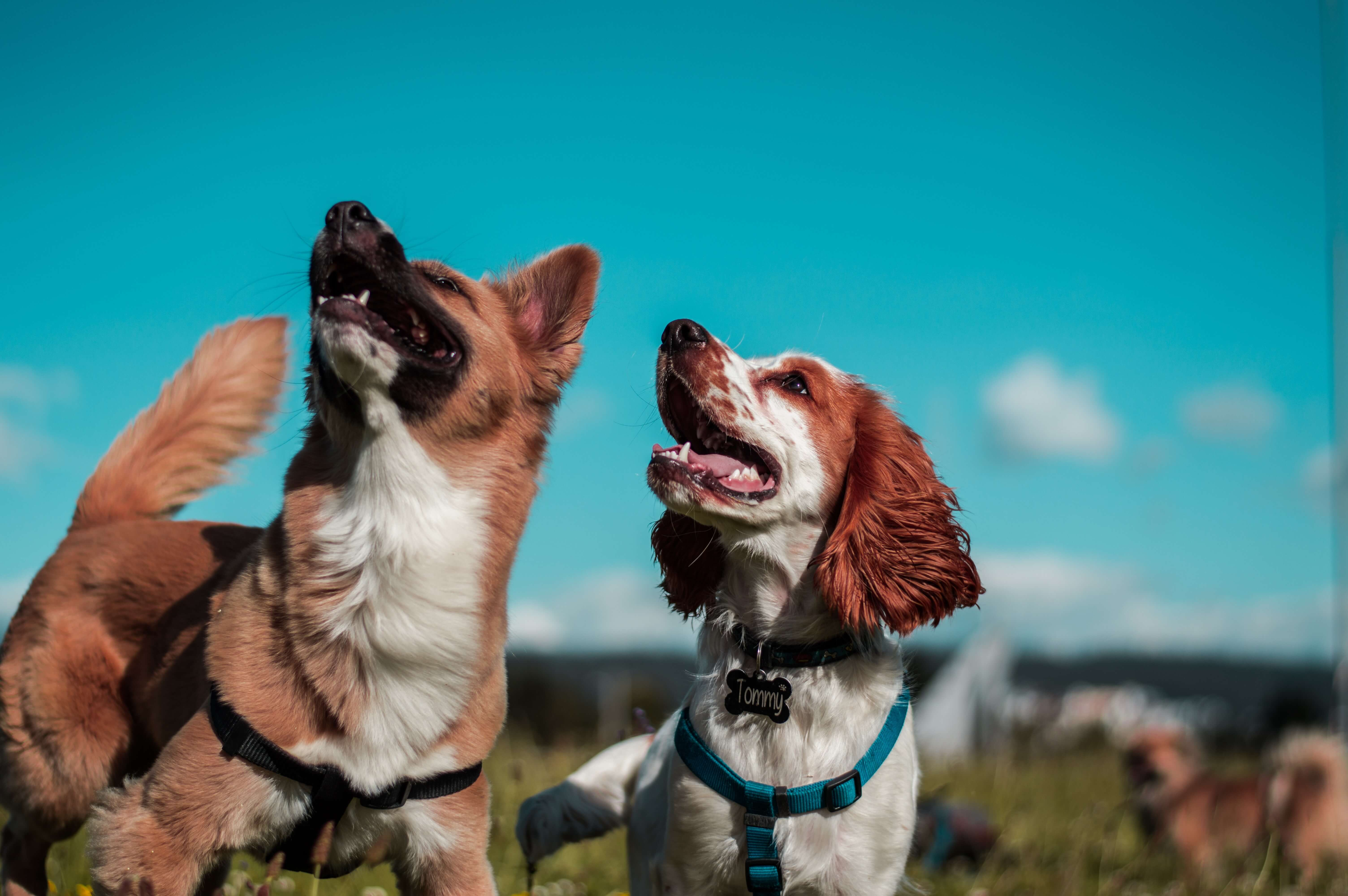 best dog friendly apartments in lexington