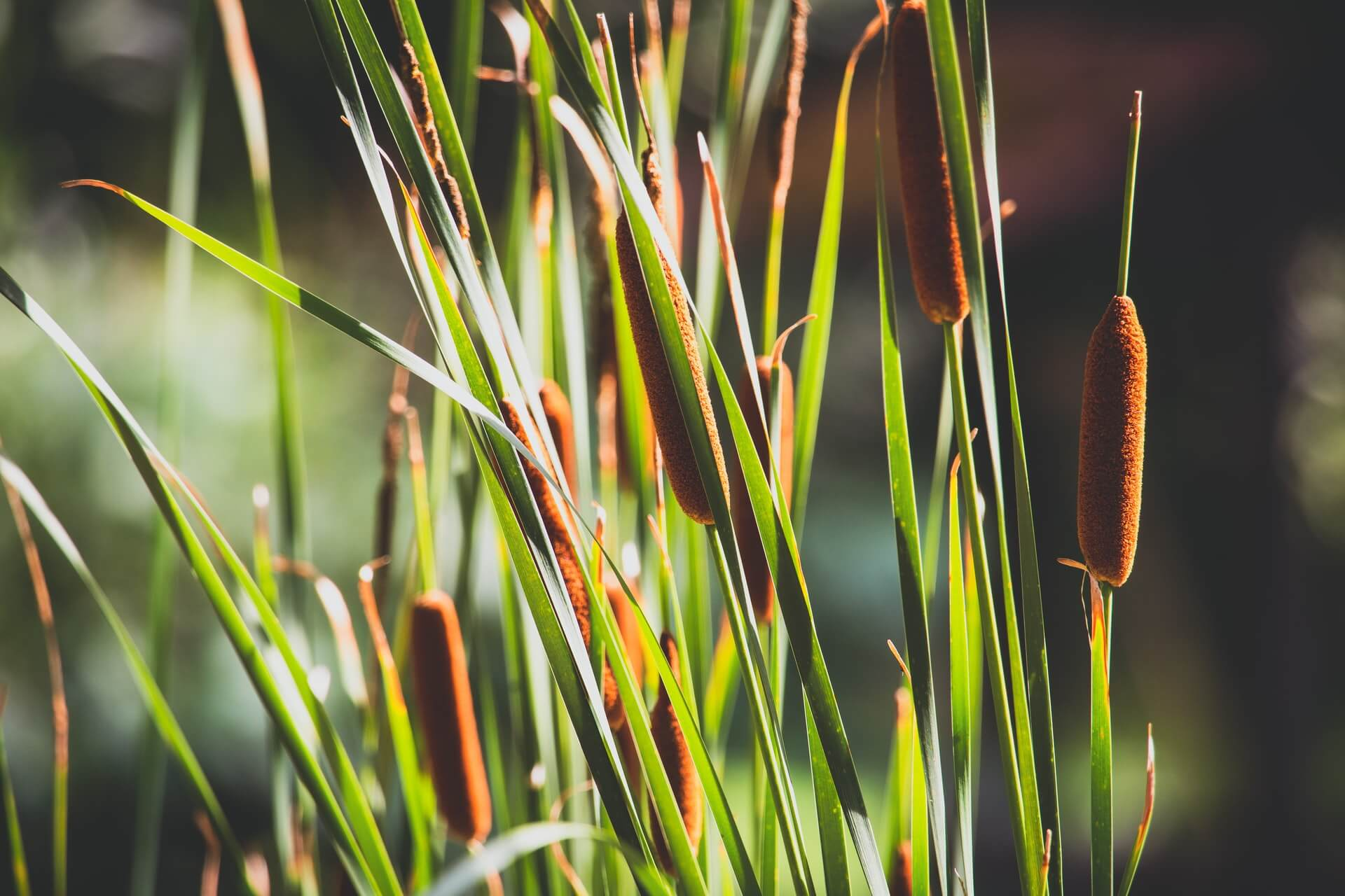 Cascade Meadow Wetlands