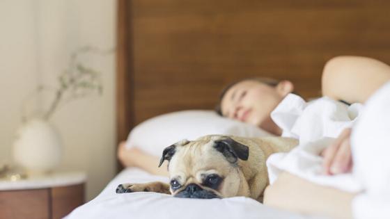 Woman and Dog Sleeping