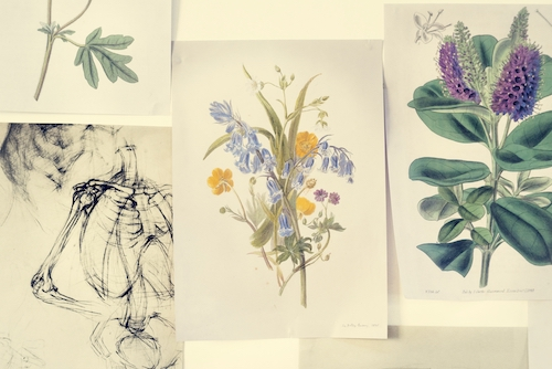 sketches and watercolors