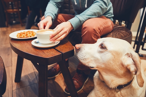 there are plenty of dog friendly restaurants in dc