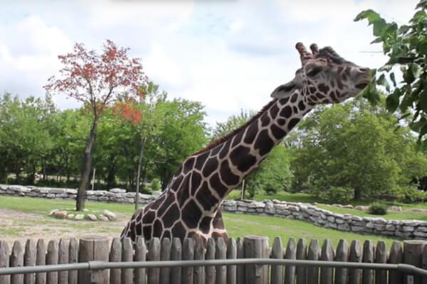 detroit zoo royal oak michigan