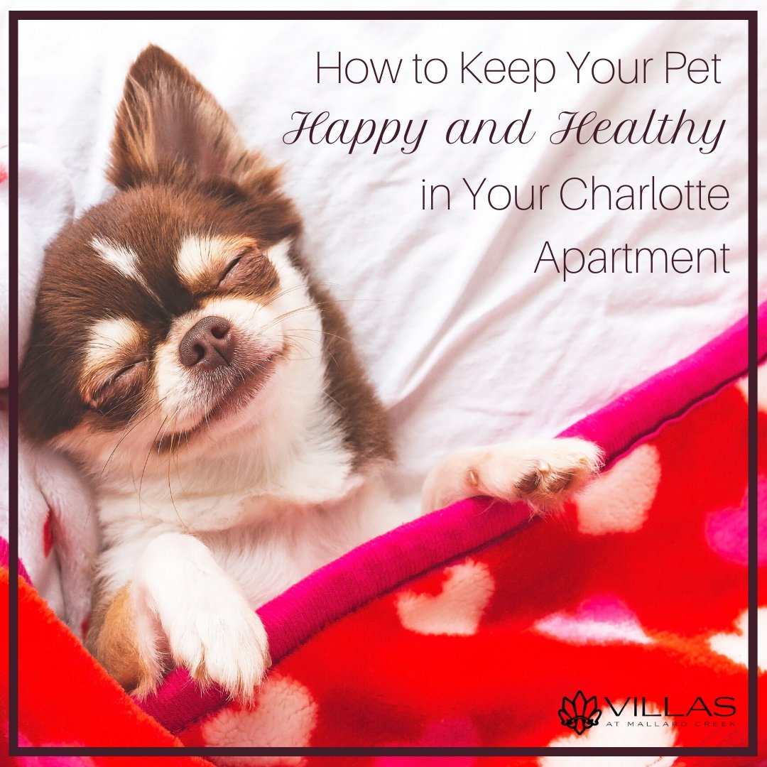 How to Keep Your Pet Happy and Healthy in Your Charlotte Apartment | Villas at Mallard Creek