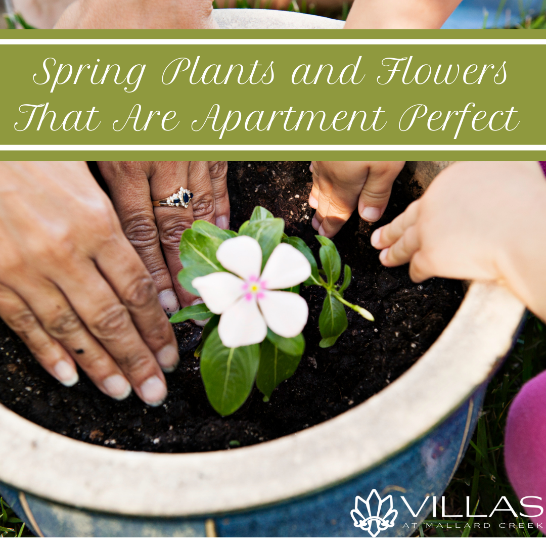 Spring Plants and Flowers That Are Apartment Perfect  | Villas at Mallard Creek