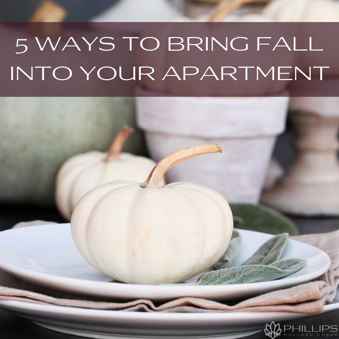 5 Ways to Bring Fall Into Your Apartment | Phillips Mallard Creek