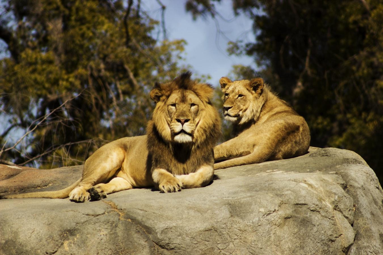 Potawatomi Zoo South Bend, IN