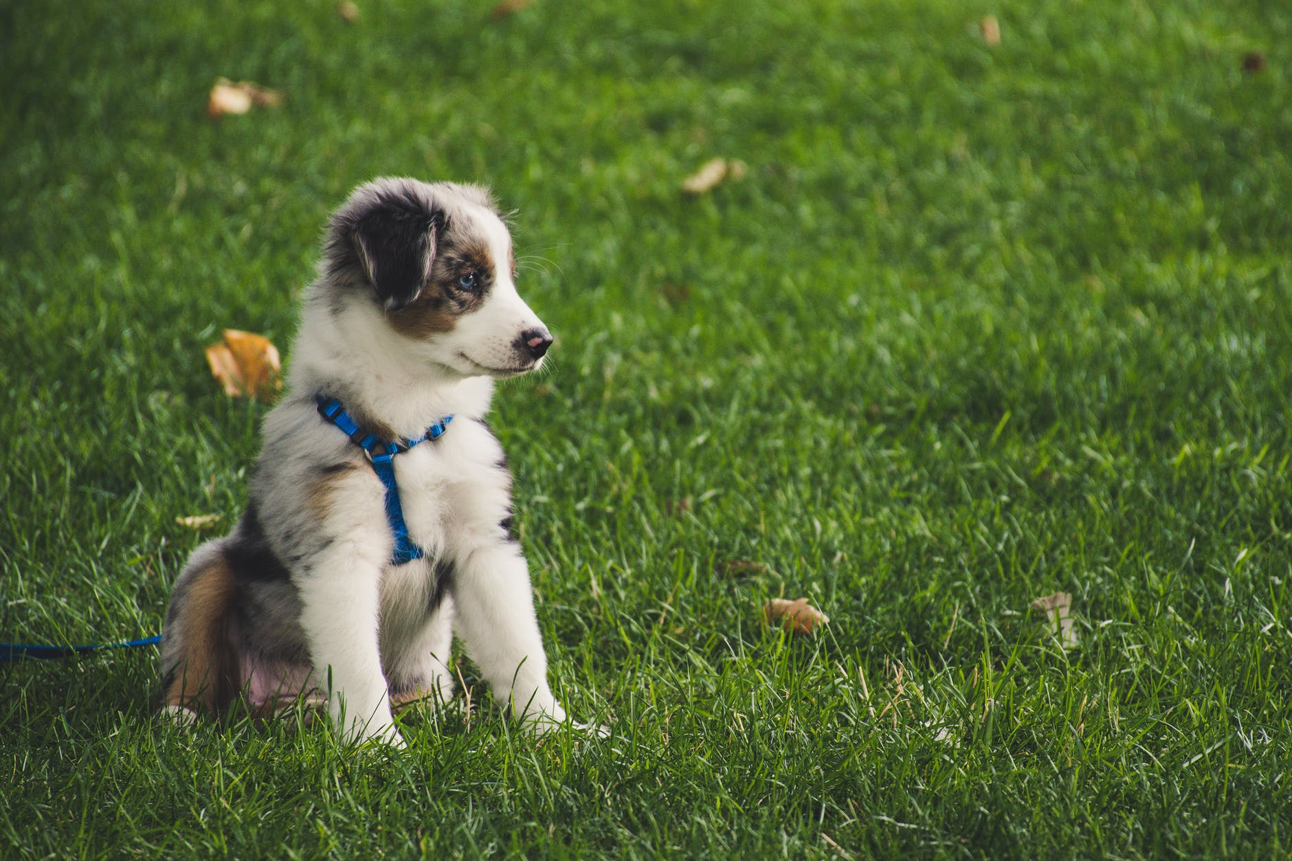 Small Puppy on Leash