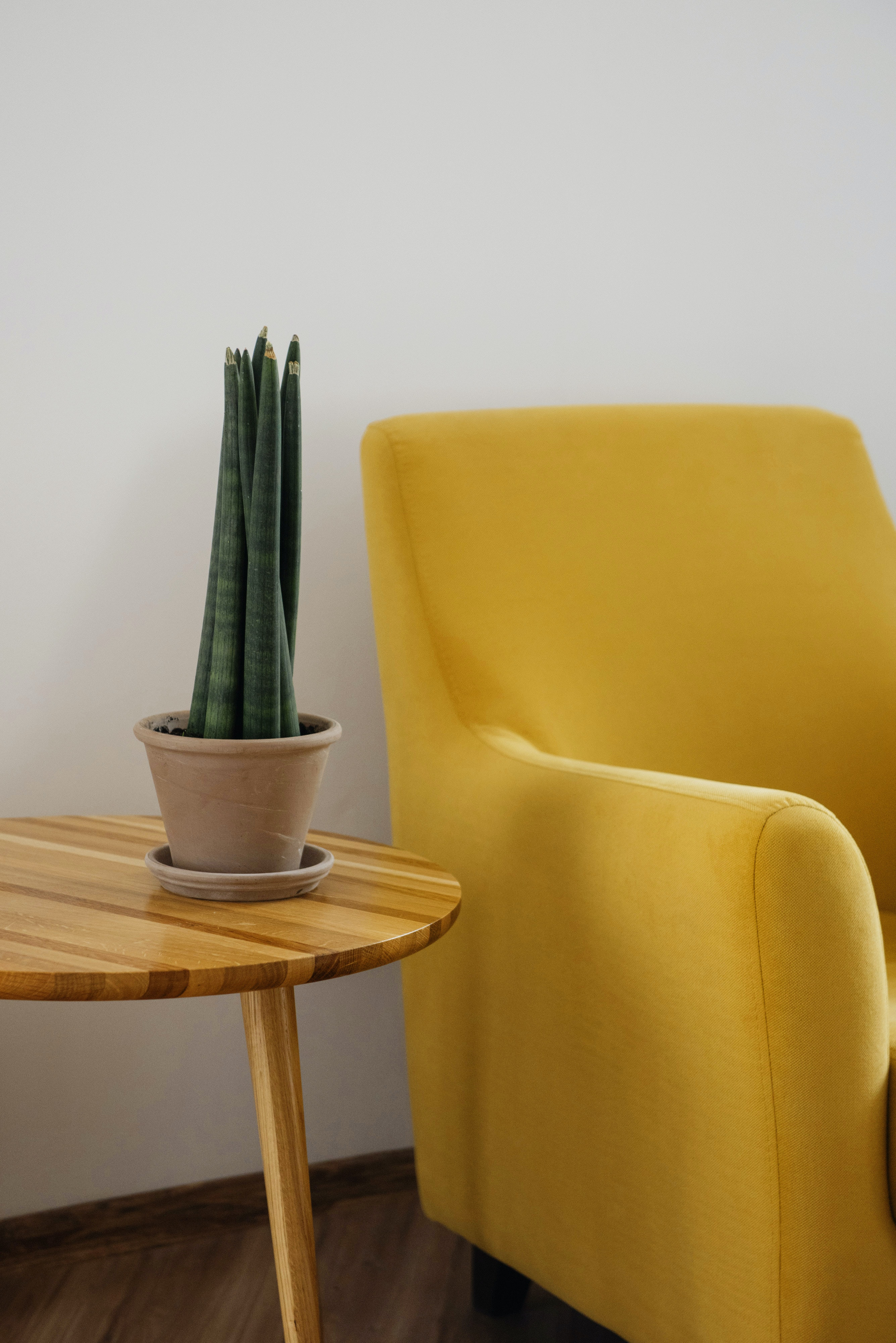 a photograph of a bright yellow chair next to a plant on a table