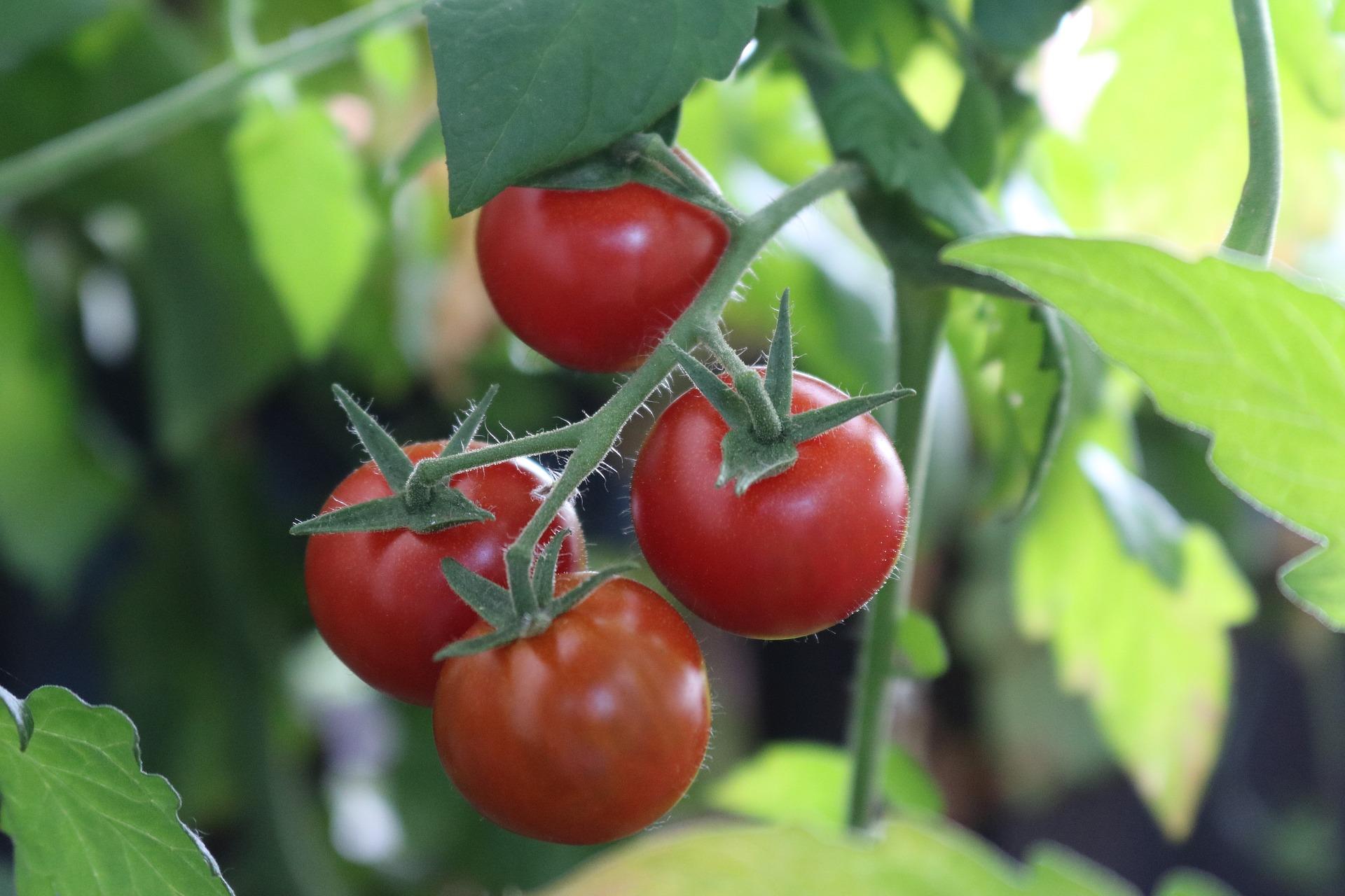 Vegetable Garden Apartments For Rent Sugar Land, TX