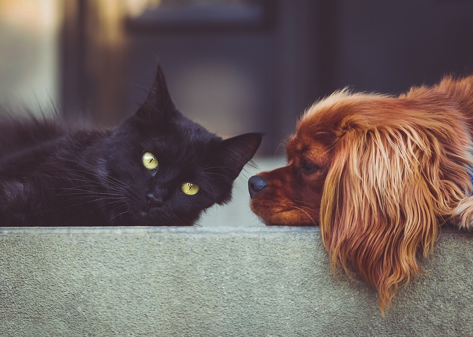 Top Pet-Friendly Apartment Search Tips in Mooresville, NC