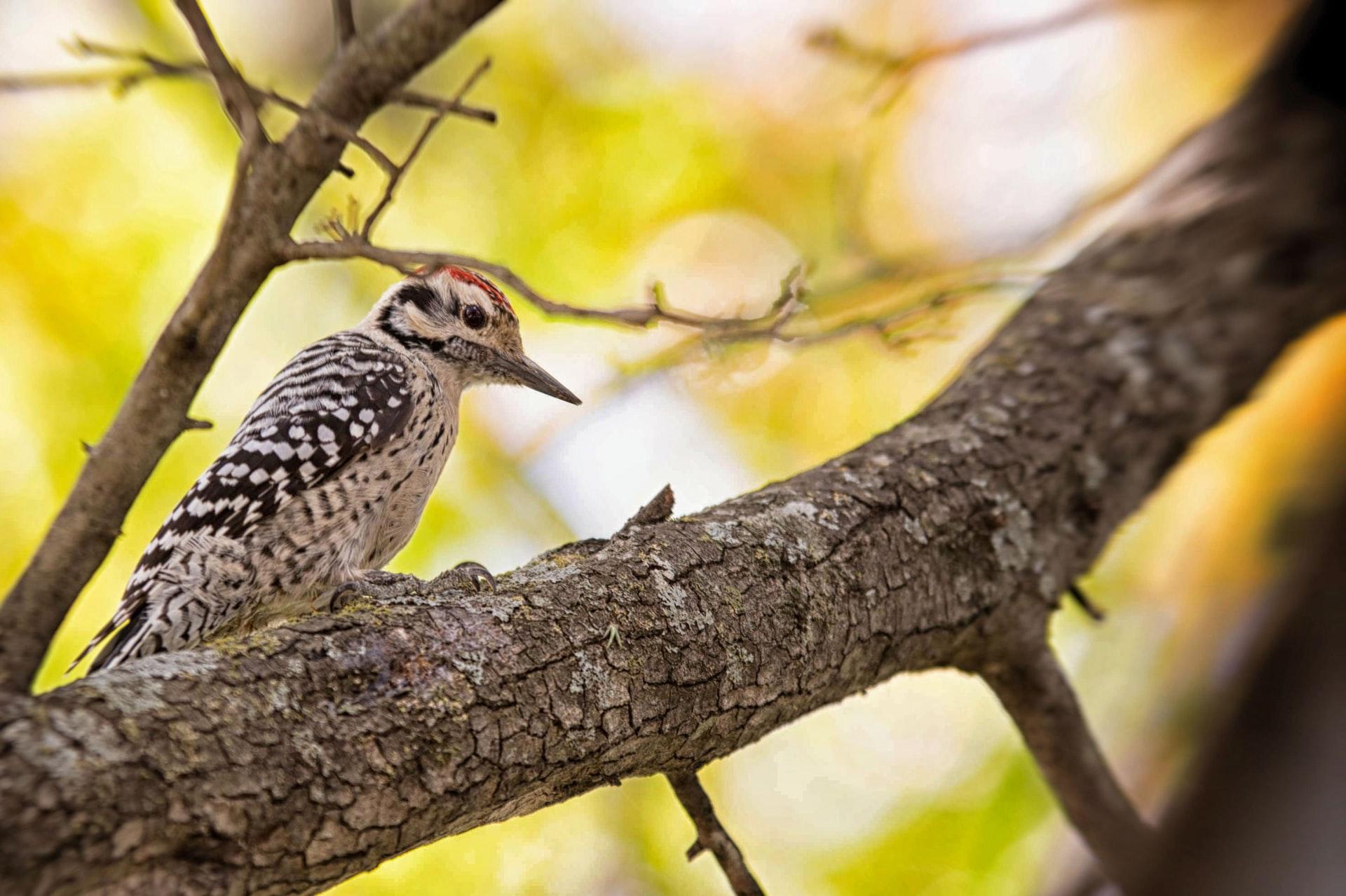 world bird sanctuary valley park missouri