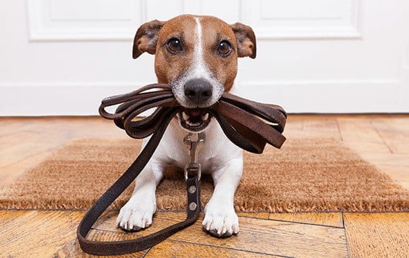 Our pet friendly apartments are perfect for you and your pet to share