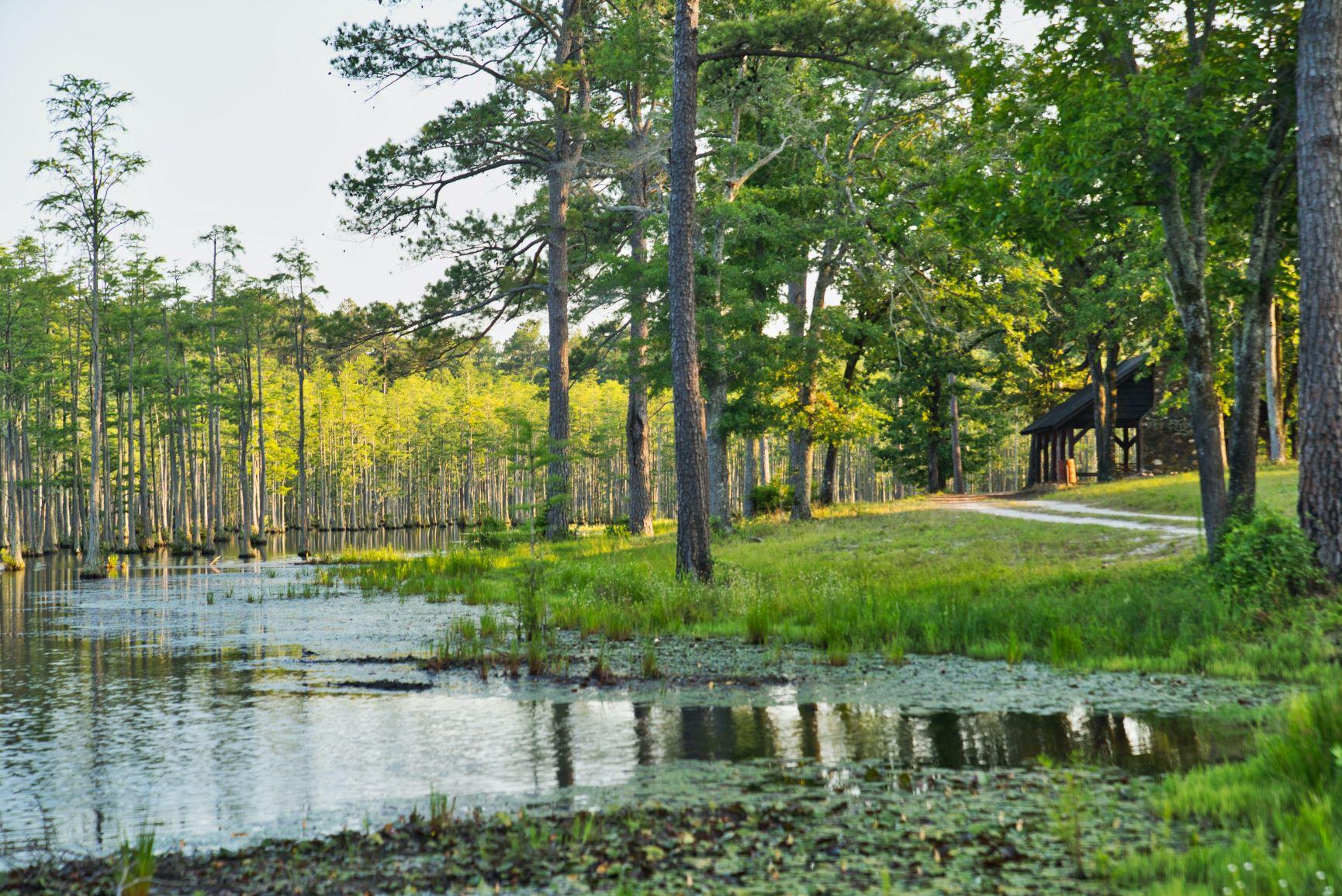 Carvers Creek State Park