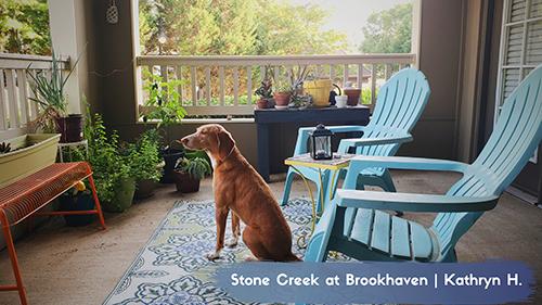 Dog on Beautiful Patio at Stone Creek at Brookhaven