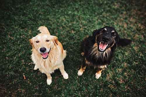 Two cute dogs looking up into the camera