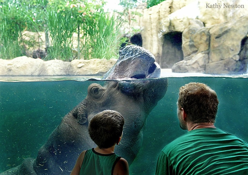 the cincinnati zoo ohio