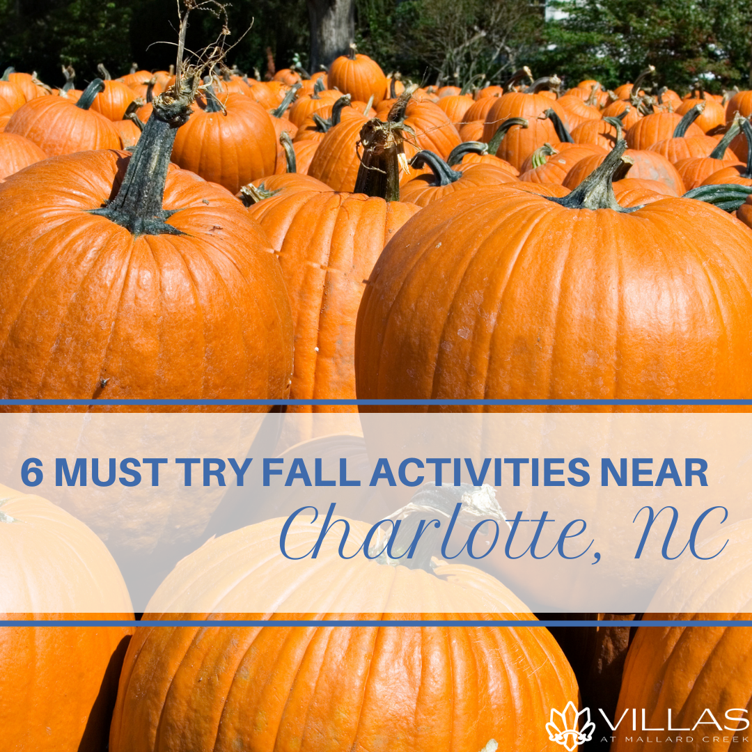 6 Must Try Fall Activities Near Charlotte, NC | Villas at Mallard Creek Apartments