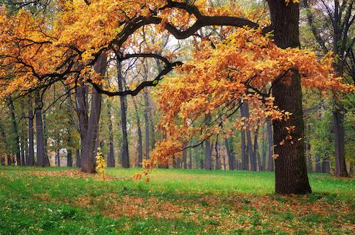 visit the arboretum