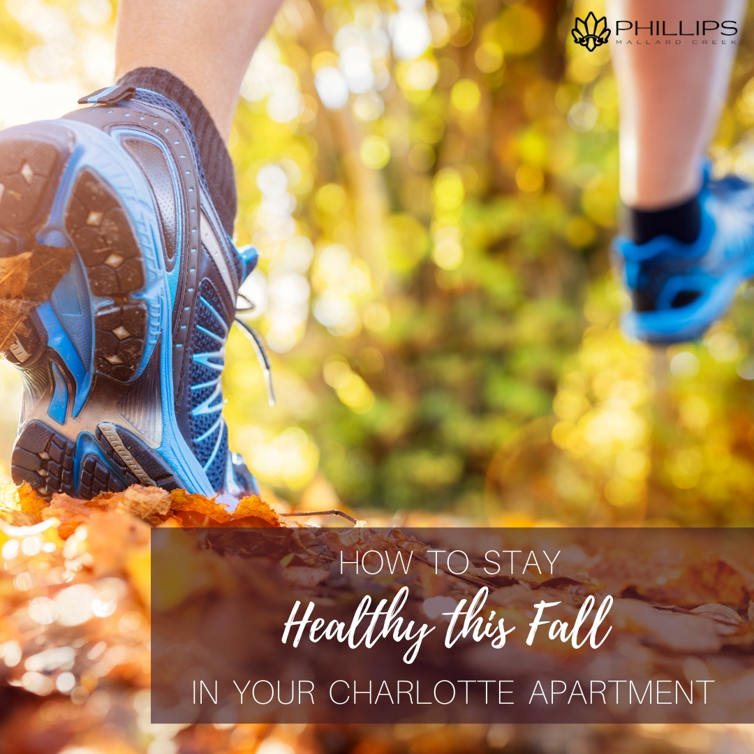How to Stay Healthy This Fall in Your Charlotte Apartment | Phillips Mallard Creek