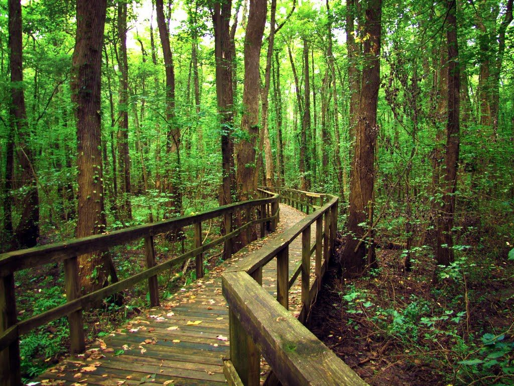 cypress grove nature park