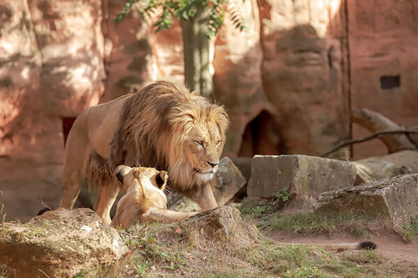 Amarillo Zoo Texas