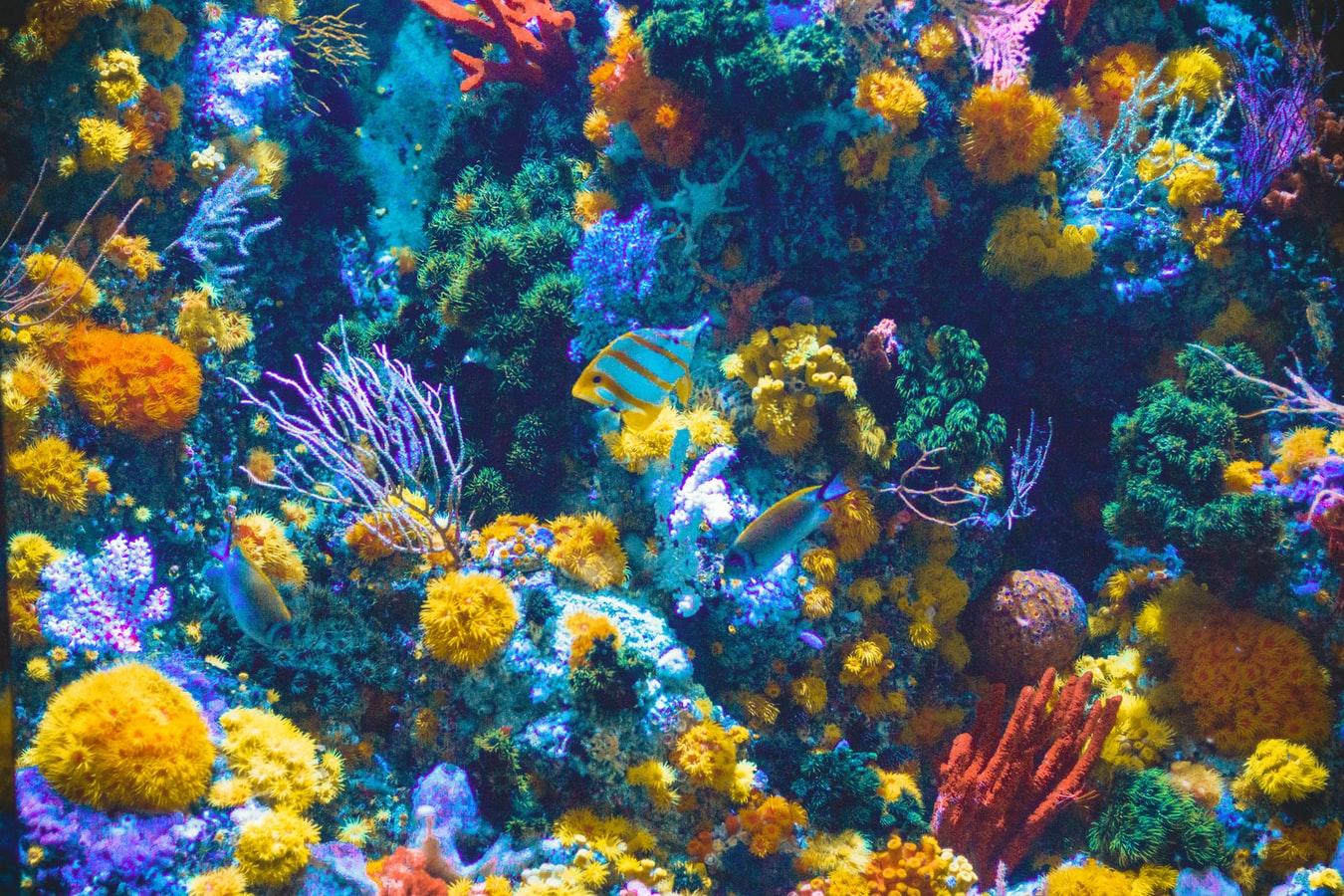 cleveland aquarium ohio