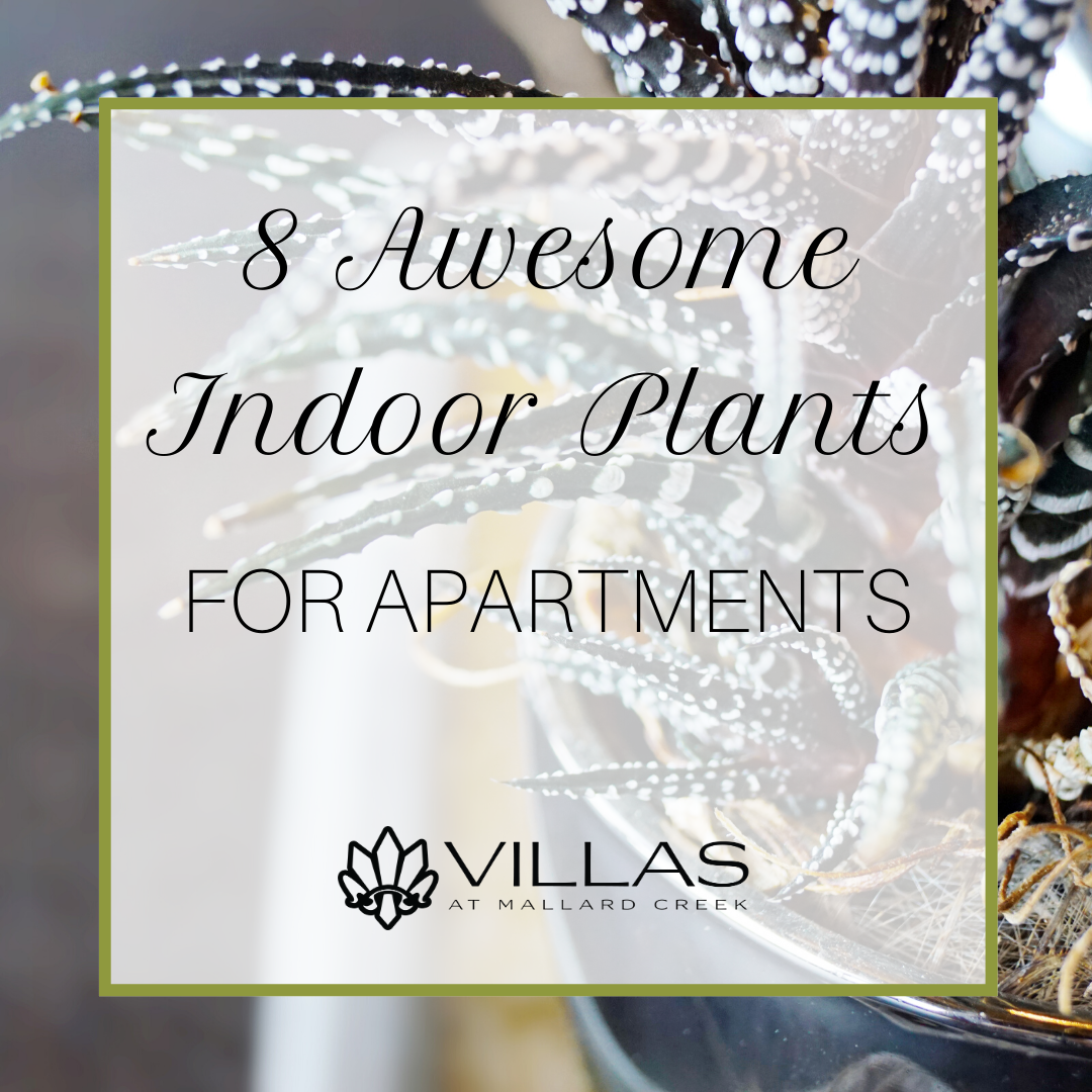 8 Awesome Indoor Plants for Apartments | Villas at Mallard Creek