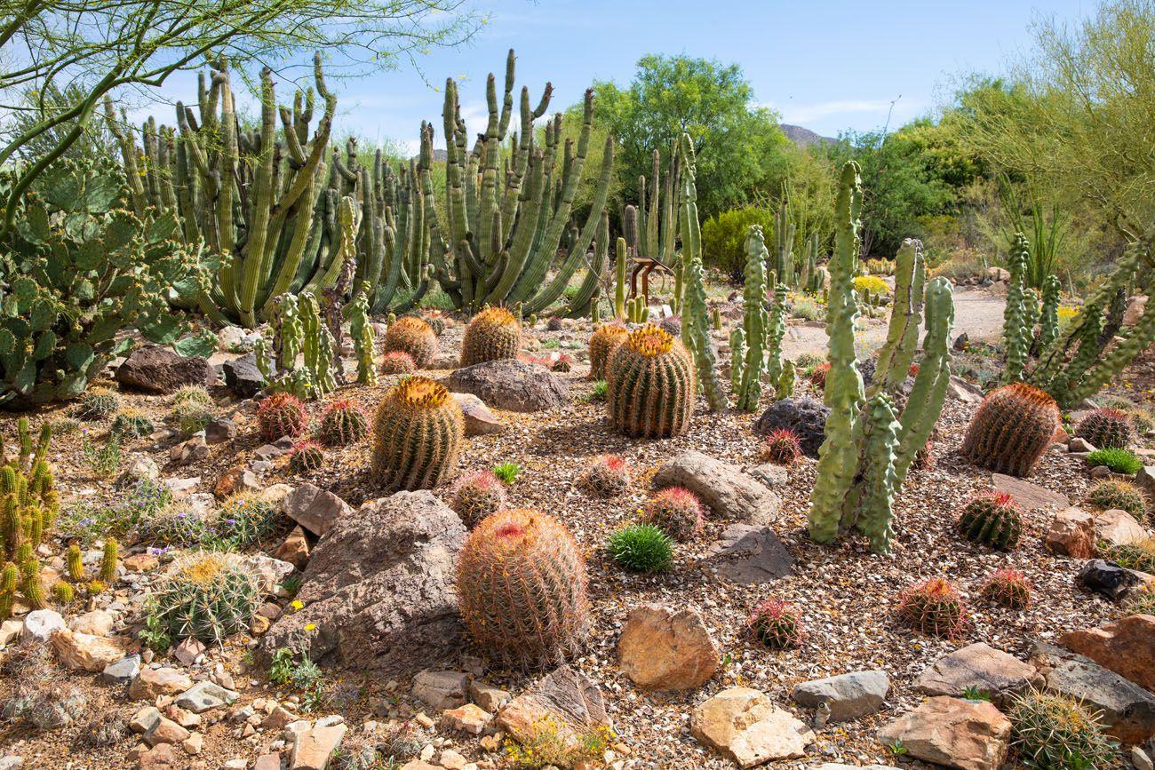 arizona sonora desert museum tucson arizona