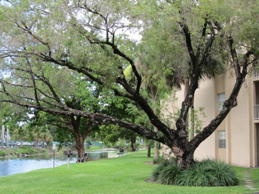 Two large branched trees with lake and apartment building in background