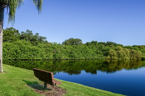 Timber Chase at Sarasota Bay Sarasota Florida Lake View with a Bench and Surrounding Foliage