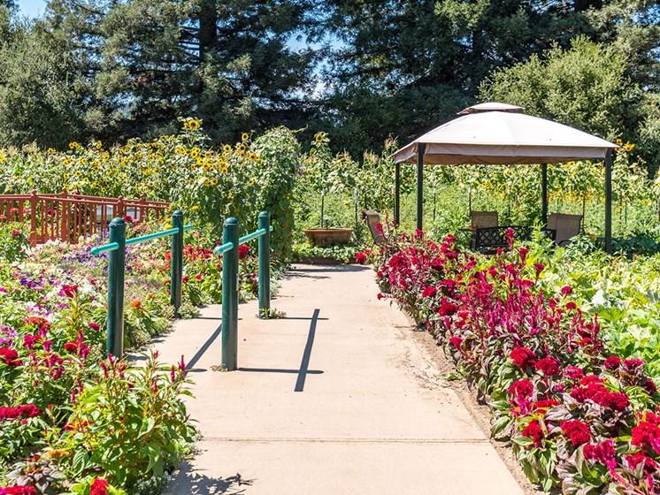 Organic Heirloom Garden at Healdsburg, A Pacifica Senior Living Community, Healdsburg, CA