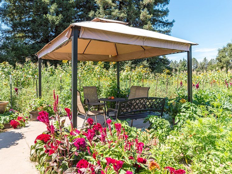 Participate and Enjoy Our Organic Heirloom Garden at Healdsburg, A Pacifica Senior Living Community, Healdsburg, 95448