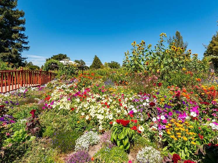 Colorful Flowers In Garden at Healdsburg, A Pacifica Senior Living Community, California, 95448