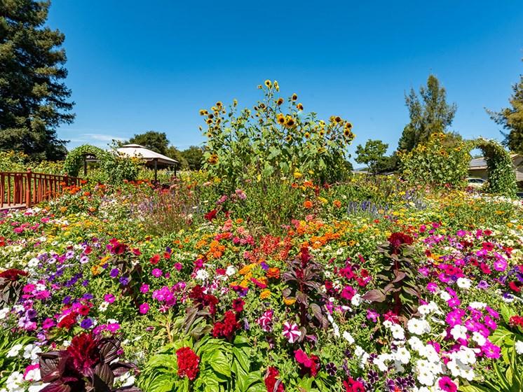 Variety Of Beautiful Flowers at Healdsburg, A Pacifica Senior Living Community, Healdsburg, CA, 95448