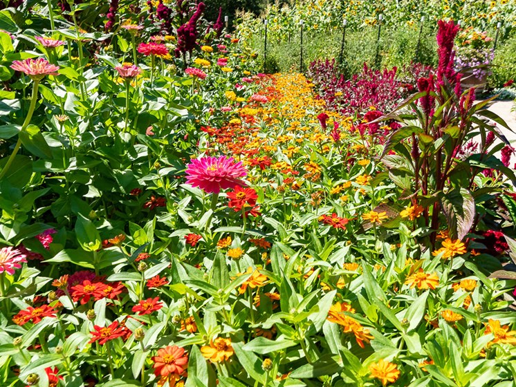 Tranquil Garden at Healdsburg, A Pacifica Senior Living Community, California, 95448