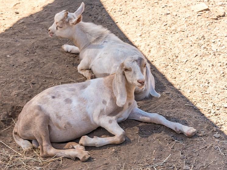 Animals Enjoying At The Site at Healdsburg, A Pacifica Senior Living Community, Healdsburg, 95448