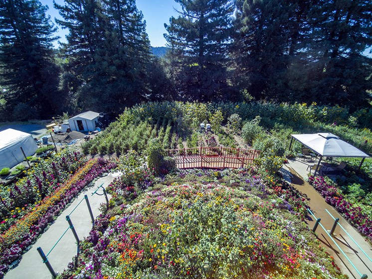 Drone View Of Garden at Healdsburg, A Pacifica Senior Living Community, Healdsburg, CA