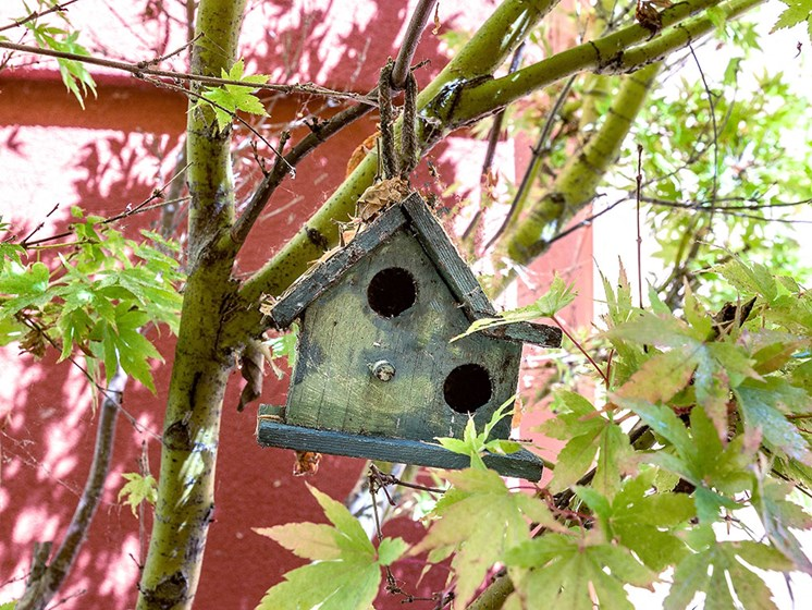 Artistic Bird Nest at Pacifica Senior Living Union City, Union City, 94587