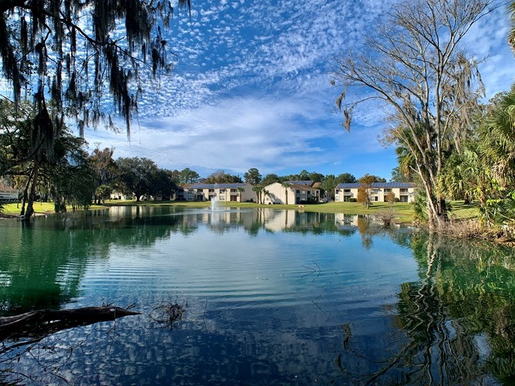 Tranquil Pond View