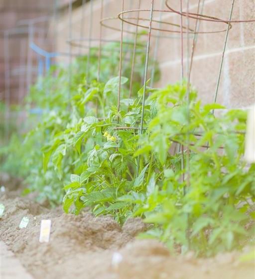 New Plantation at Cogir of Vallejo Hills, California
